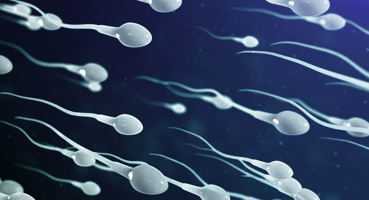 The Connection Between Testosterone, Sperm Production, and Fertility
