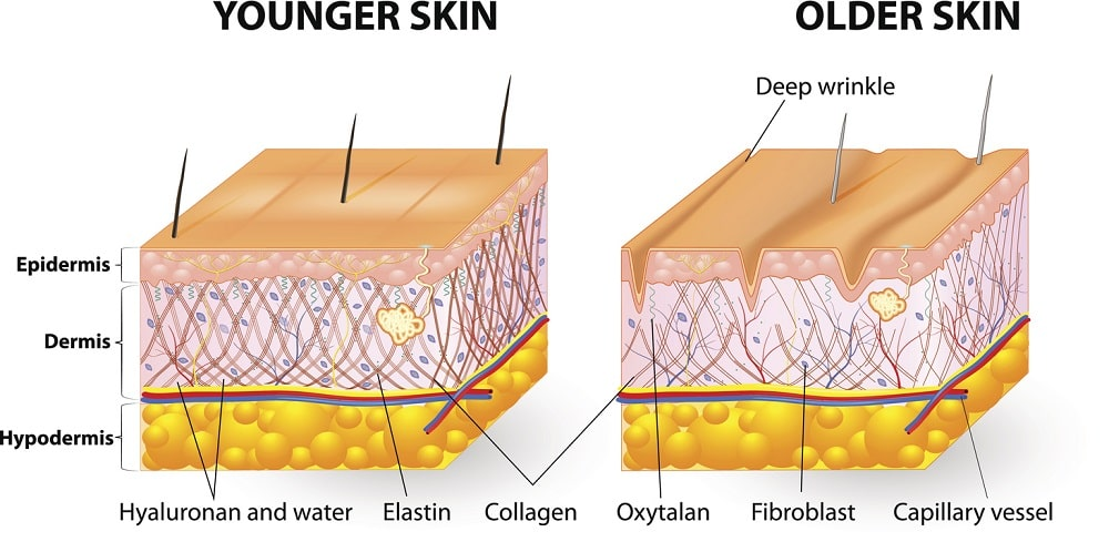 Dermis, Epidermis, and Hypodermis Three Layers of the Skin