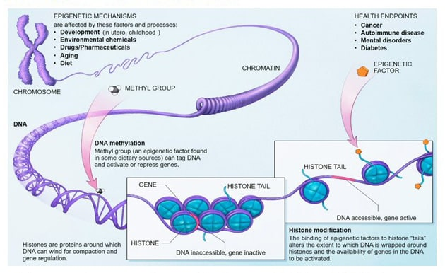 The science of epigenetics informs us about the potential link between HGH and cancer