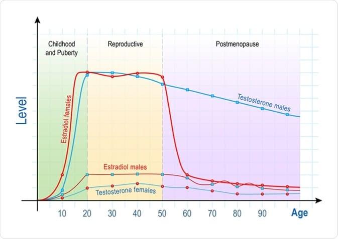 Chart Hormone levels in women through lifetime