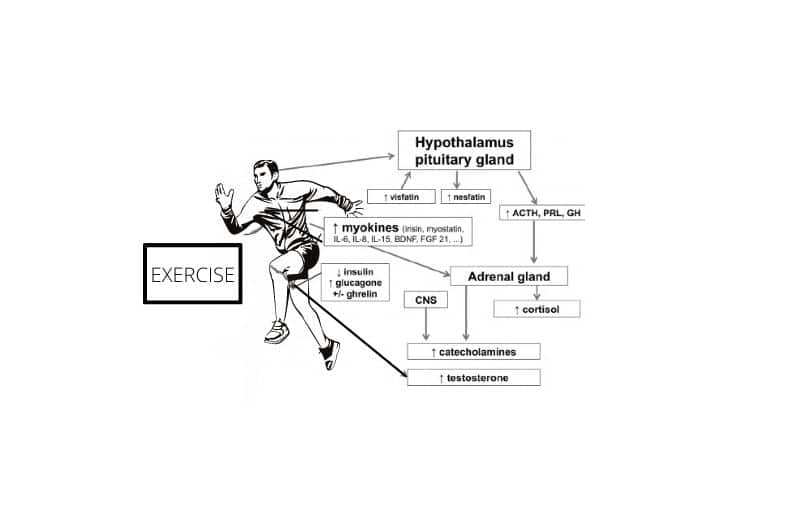 Exercise and hormones